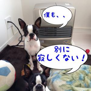 今日のわんにゃん☆ ?全然寂しくない!?