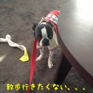 しつけ奮闘!トホホの昼んぽ(-。-;