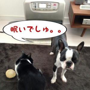 今日のわんにゃん☆ ?焦った!?