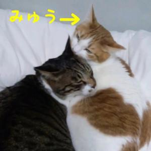 実家の3ニャンズ☆