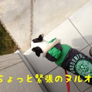 【祝】ヌルオ、散歩デビュー☆