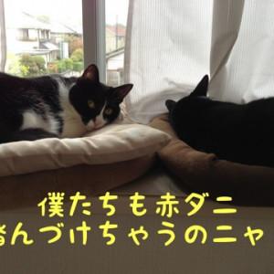 タカラダニ(赤ダニ)ダカラナニ?(*_*)