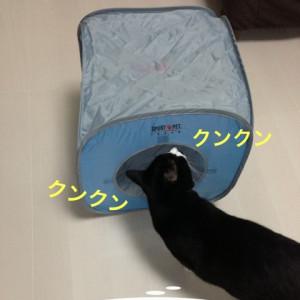 ハムチプにプレゼント☆