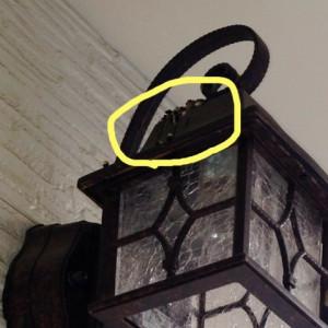 我が家にツバメがやってきた???
